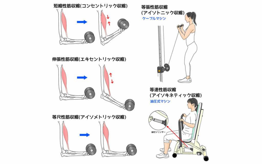 筋収縮の種類