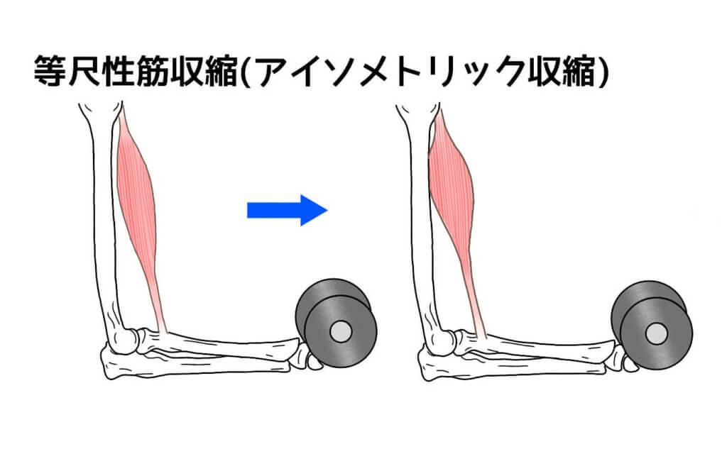等尺性筋収縮