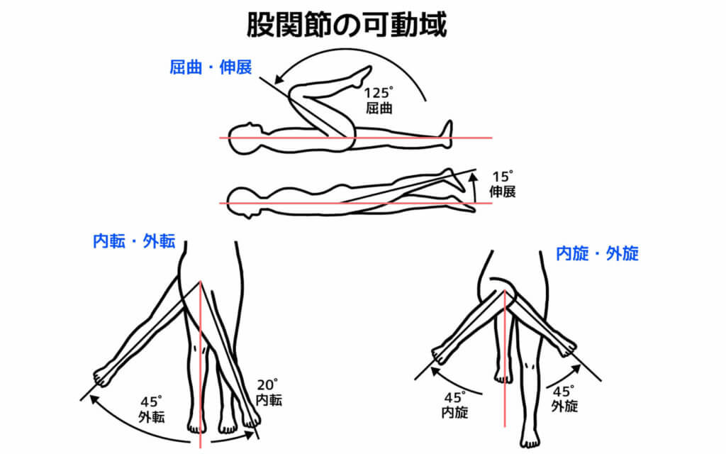 股関節の関節可動域