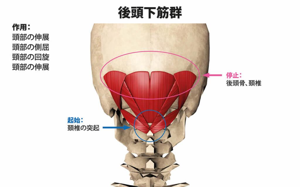 後頭下筋群(大後頭直筋、小後頭直筋、上頭斜筋、下頭斜筋)