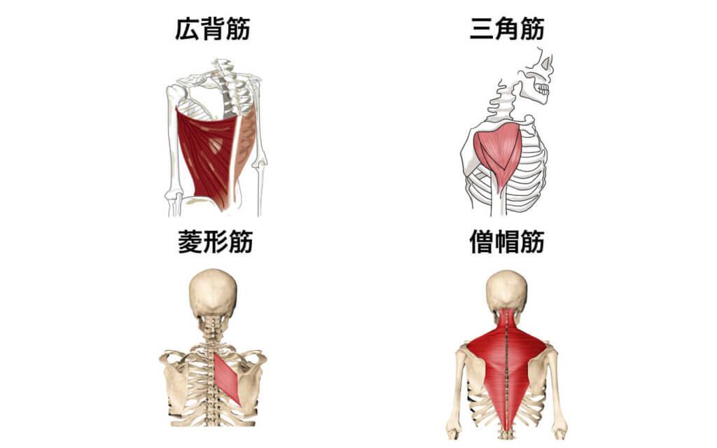 筋肉群まとめ3:肩こりを改善したい時