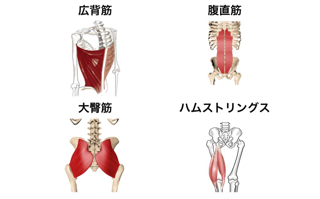 筋肉群まとめ4:腰痛を改善したい時