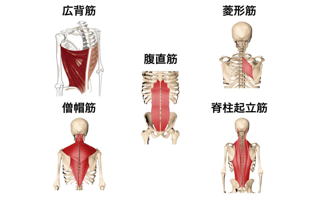筋肉群まとめ5:姿勢を改善したい時