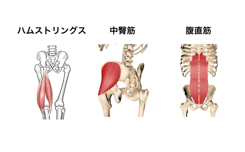 筋肉群まとめ9:X脚を直したい時
