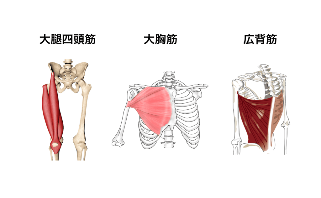 筋肉群まとめ10:運動不足の方が運動を始める時
