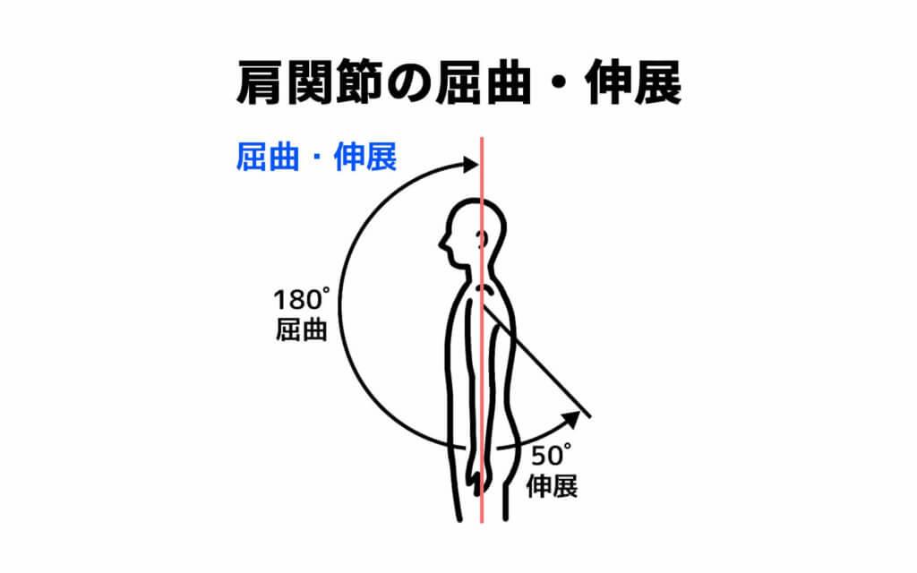 肩関節の屈曲と伸展