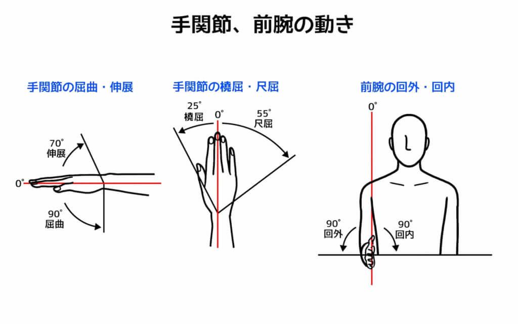 手関節と前腕の可動域