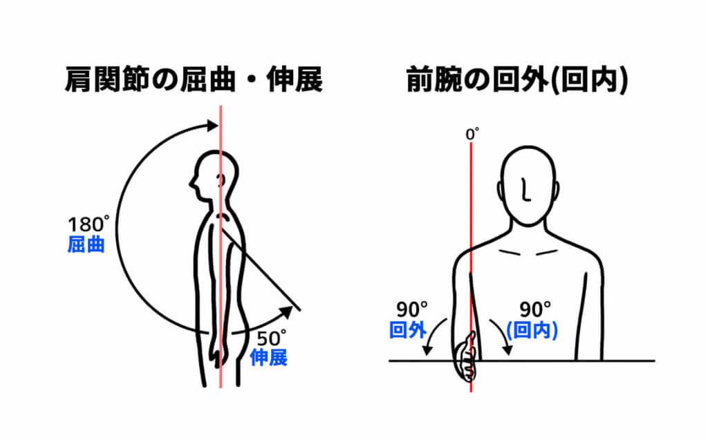 肩関節の屈曲と伸展、前腕の回外と回内