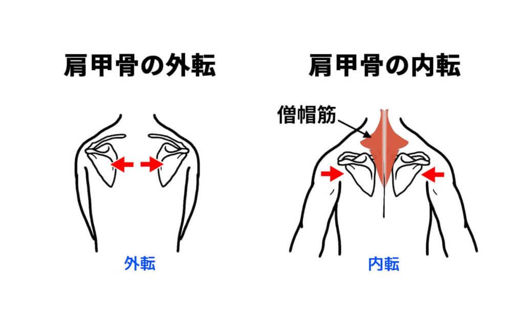 肩甲骨の外転と内転
