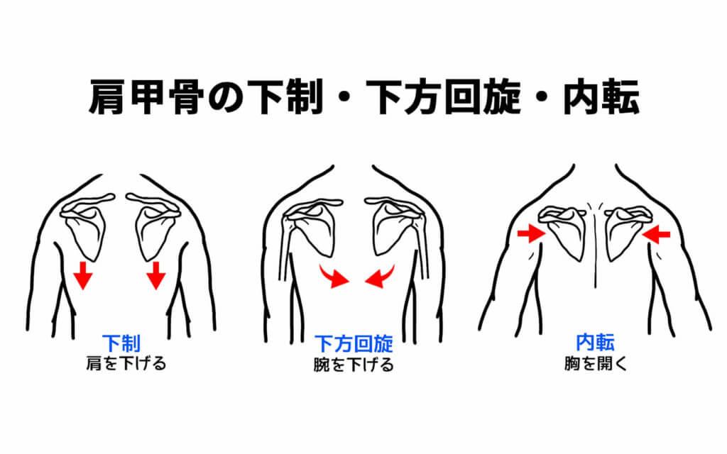 肩甲骨の下制と下方回旋と内転
