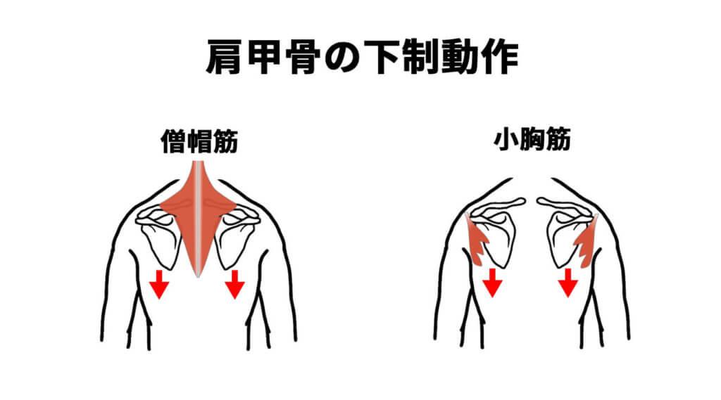 肩甲骨の下制動作