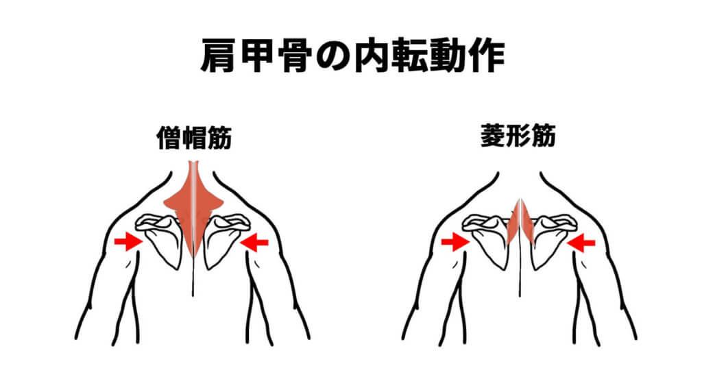 肩甲骨の内転動作