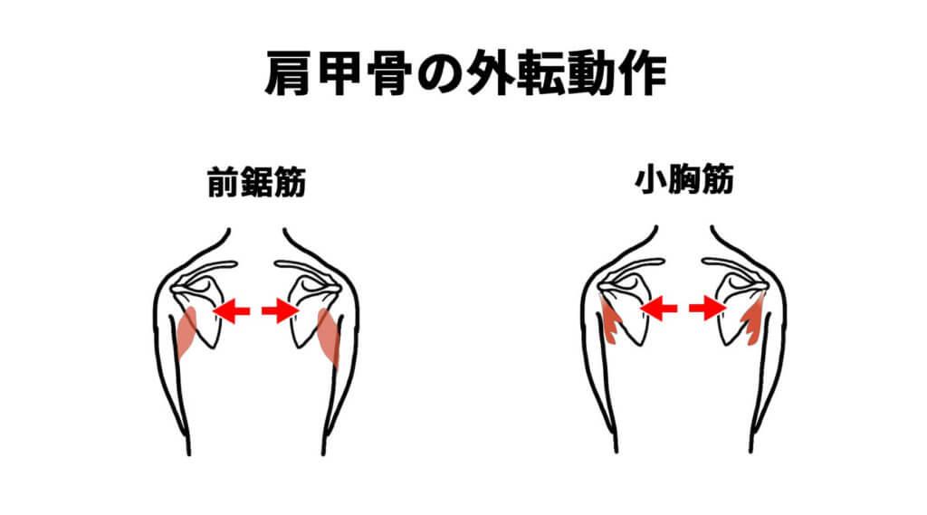 肩甲骨の外転動作