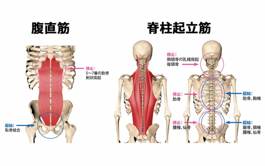 腹部の筋力低下