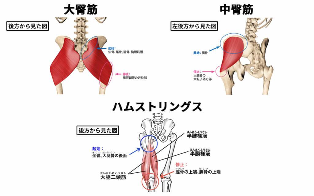 臀部やハムストリングスの筋力低下