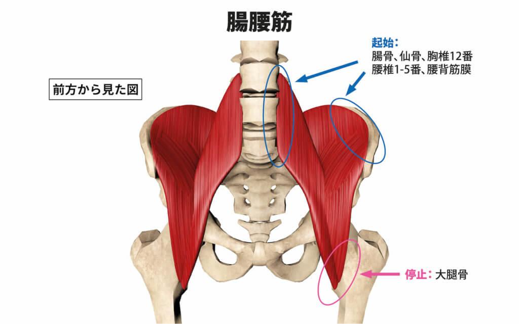 腸腰筋の柔軟性低下