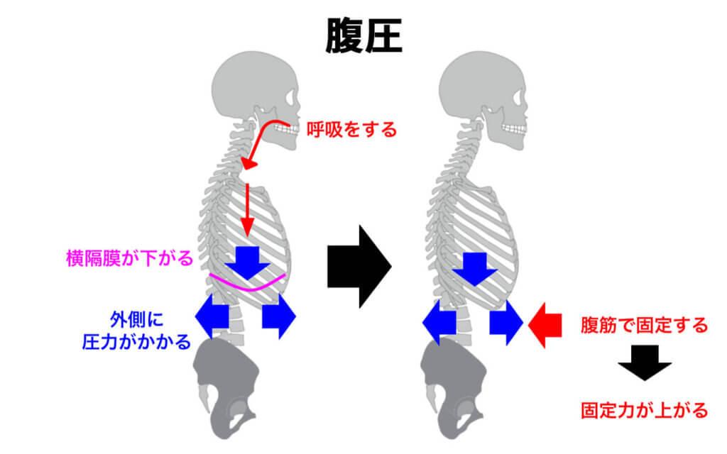 体幹部を固定力を増すには腹圧も重要